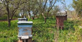 Bienenstöcke im Naturgarten