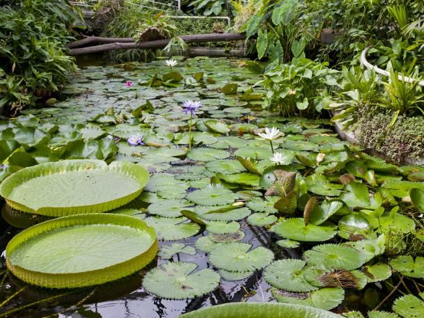 Biotop im Botanischen Garten