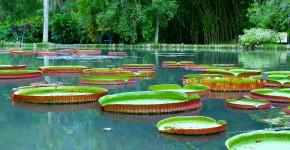 Botanischer Garten, Biotop