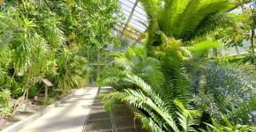 Botanischer Garten, Tropenhaus