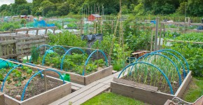 Gartengemeinschaft