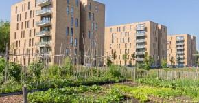 Gmeinschaftsgärten im Wohnbaugebiet