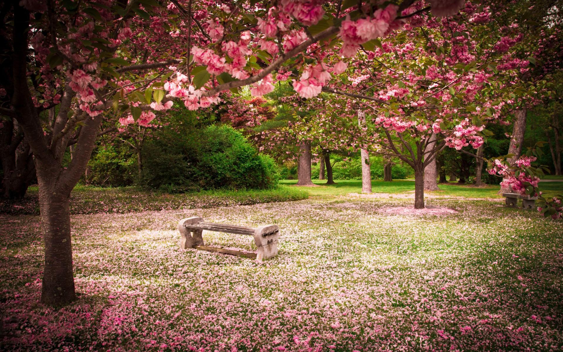 wallpaper japanische kirschblüten | loopele, Garten Ideen