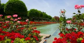 Rosengarten Cordoba