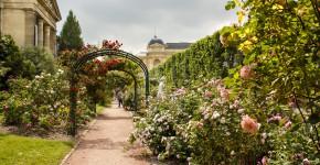 Rosengarten Jardin de Plant in Paris