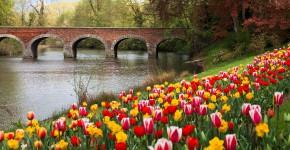 Tulpen und Narzissen im Park