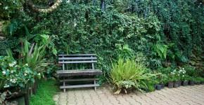 Begrünte Wand im Garten