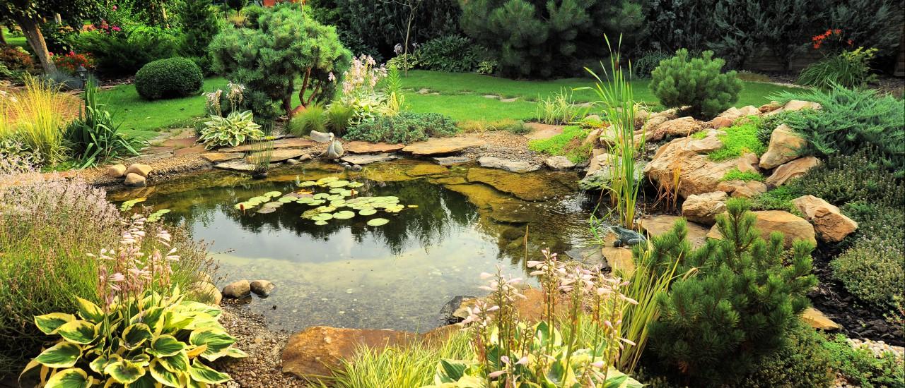 Gemeinsame Teiche vor starkem Algenbefall schützen | Garten Europa @RU_96