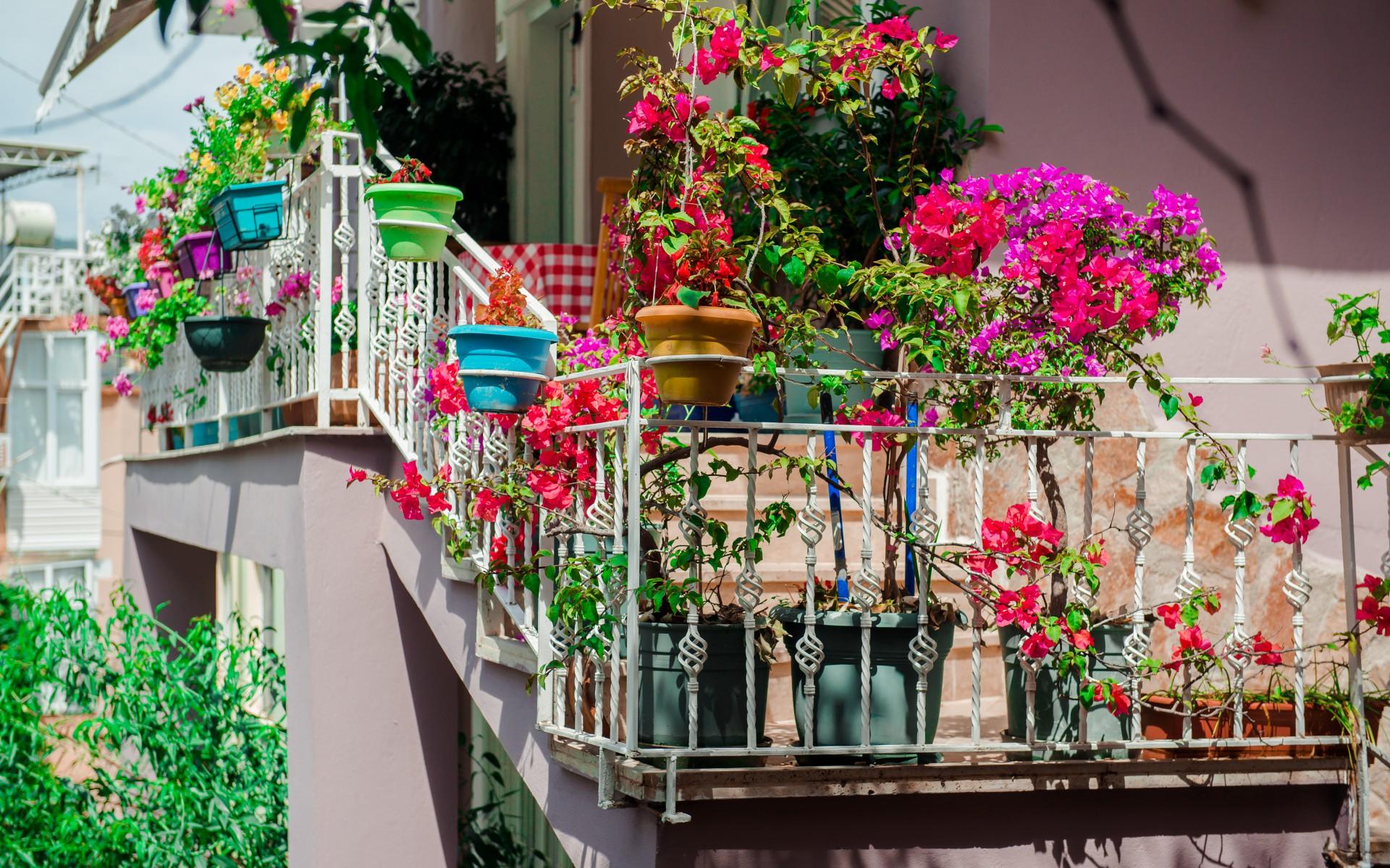 Цветы на балконе - стоковое фото amoklv #32311837.