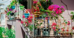 Blumen auf dem Balkon