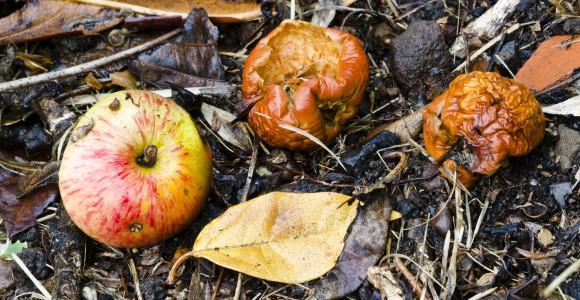 faule Äpfel vermeiden