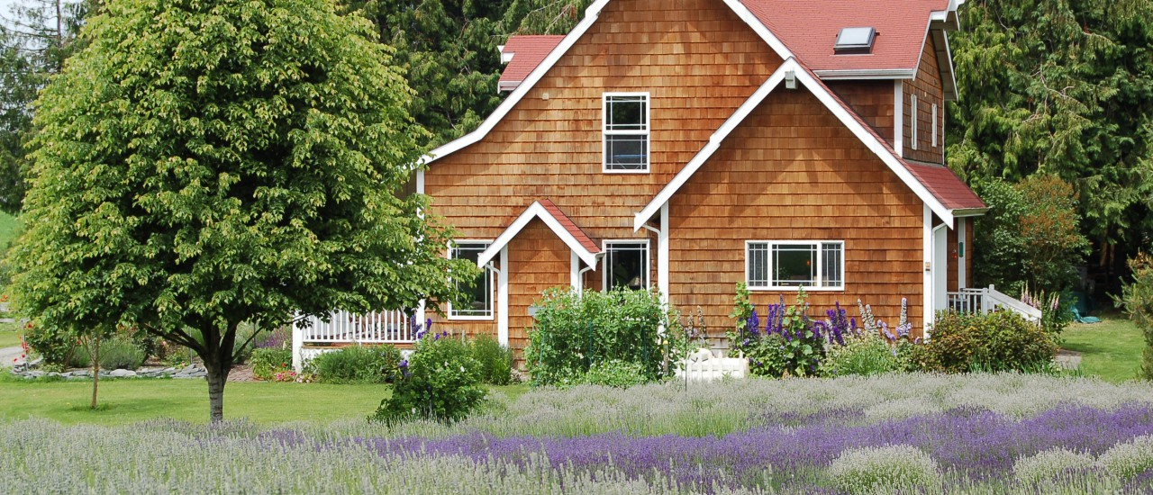 Lavendel im Hausgarten