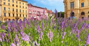 Lavendelbeet  in der Stadt
