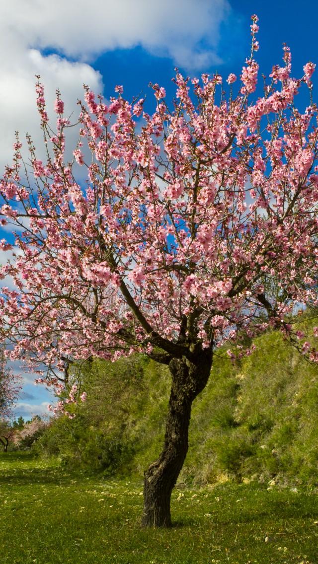 Die obstg rten garten europa - Pfirsichbaum im garten ...