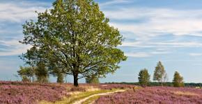 Naturschutzgebiet Lüneburger Heide