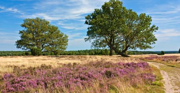 Naturschutzgebiet Lüneburger Heide, Deutschland