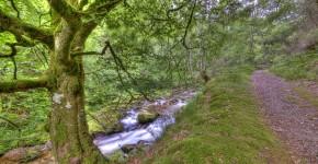 Naturschutzgebiet Muniellos, Spanien