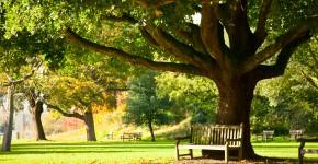 Royal Botanic Gardens, England