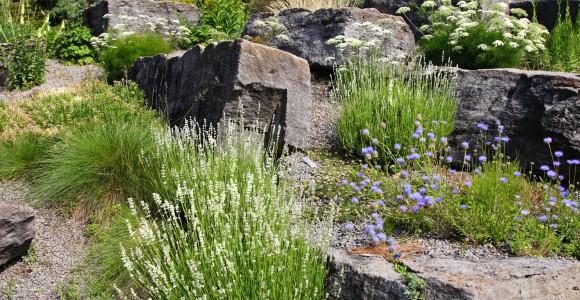 Steingarten mit großer Pflanzenvielfalt