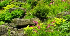 Steingarten mit unterschiedlichen Blumen und Pflanzen