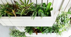 Vertical Garden  auf dem Balkon