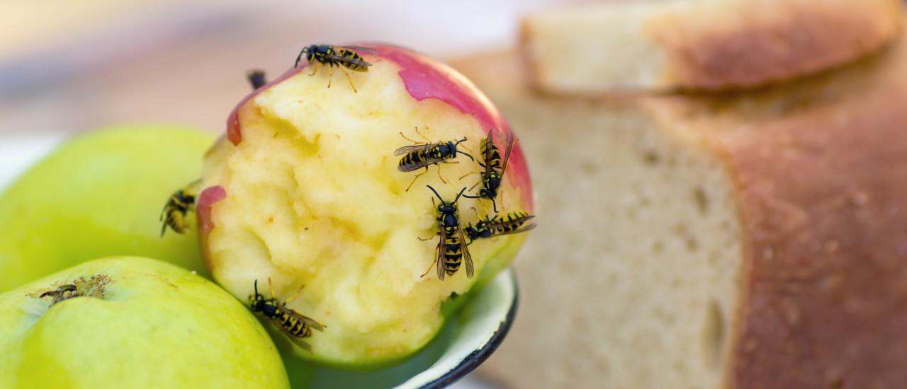 Wespen, Apfel, Brot