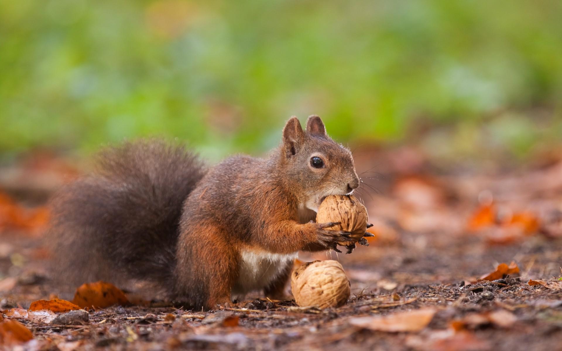 Eichhörnchen Im Garten : das eichh rnchen garten europa ~ Watch28wear.com Haus und Dekorationen