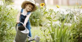 fleißiger Gartenhelfer