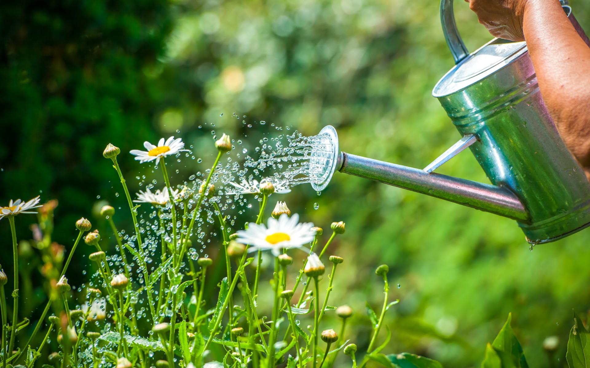 So Bewässern Sie Ihren Garten Richtig | Garten Europa Pflanzen Bewassern
