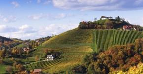 Weinstrasse im Herbst