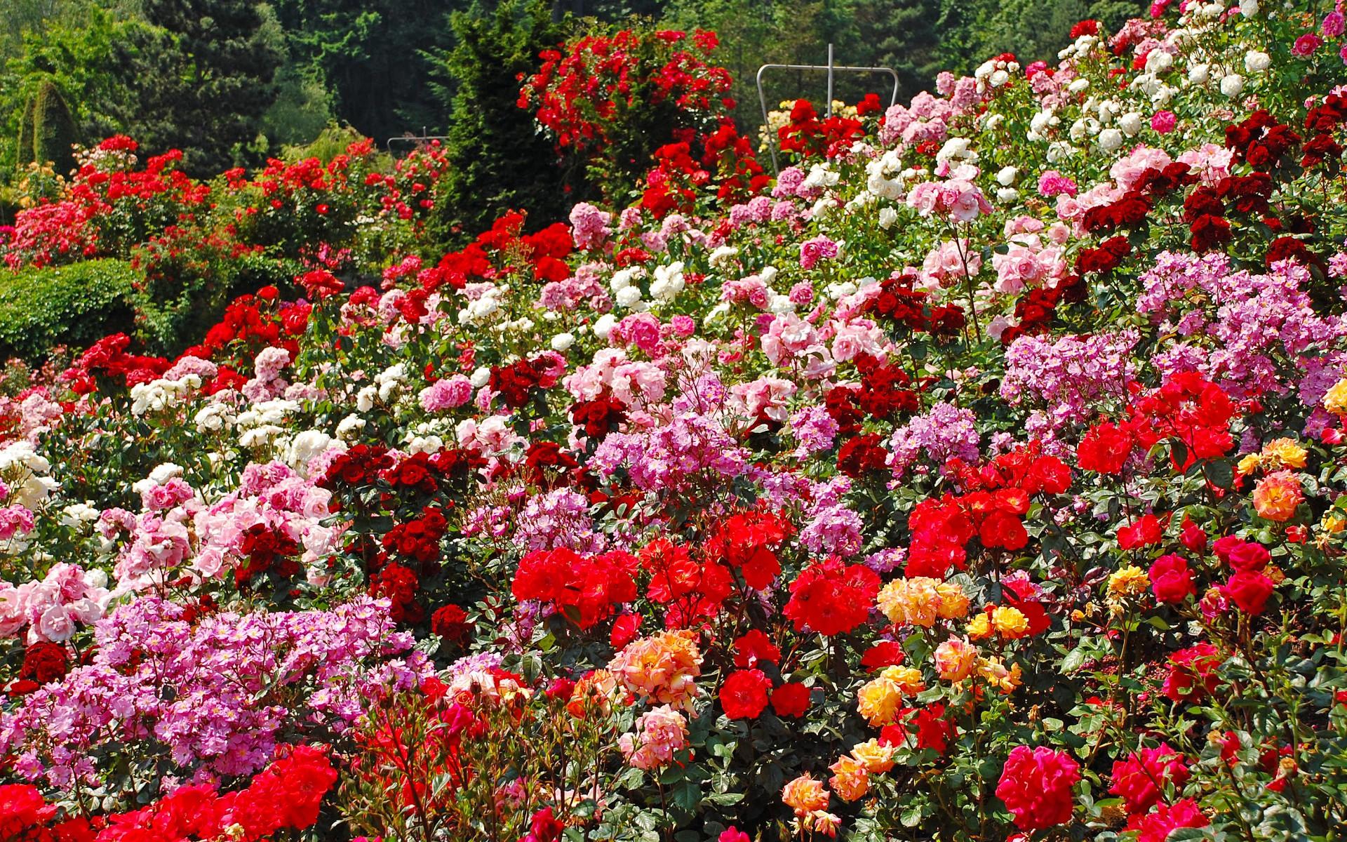 Roseng rten garten europa - Gartengestaltung rosengarten ...