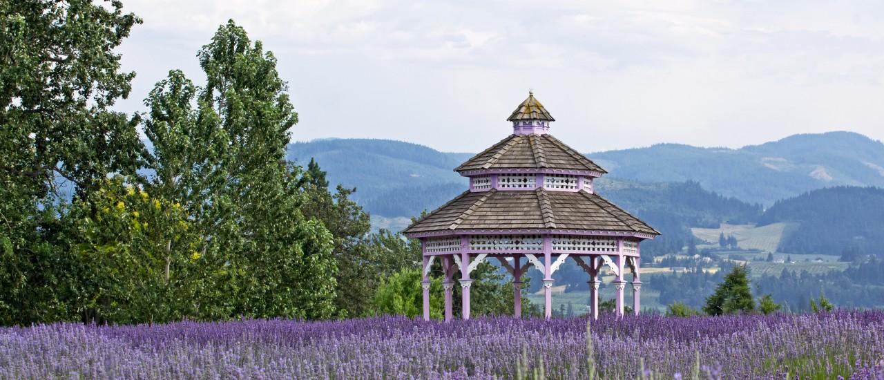 Pavillon eingerahmt von einem Lavendelfeld