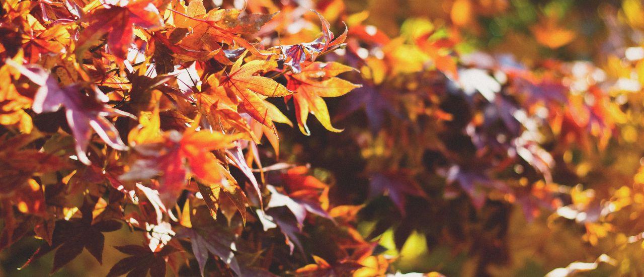 Oktober - goldener Herbst, Photo by Dayne Topkin on Unsplash