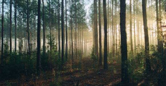 Wald, unsplash  By Steven Kamenar
