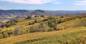 Weingärten, Piedmont, Nord Italien