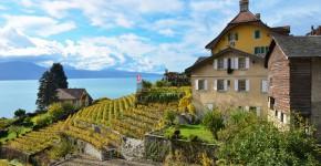 Weingärten, Region Lavaux, Schweiz
