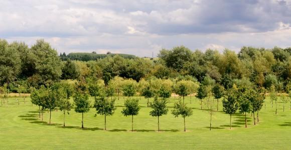 Baumkreis