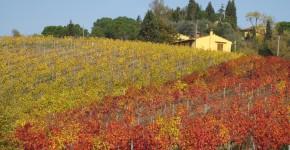 Weingärten, Chianti, Italien