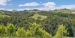 Weingärten der Steirischen Weinroute, Leutschach, Steiermark, Österreich