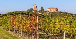 Weingärten im Herbst, Piedmont, Nord Italien