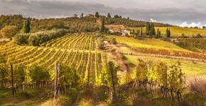 Weingärten, Italien