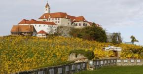Weingärten rund um die Riegersburg, Steiermark, Österreich