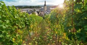 Weingarten in Deutschland