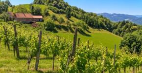Weingarten, Leutschach, Steiermark, Österreich