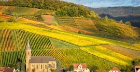 Weingarten, Pfalz, Deutschland