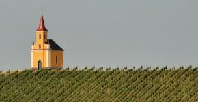 Weingarten Südsteiermark, Österreich