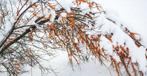 auf Schneebruch im Garten achten