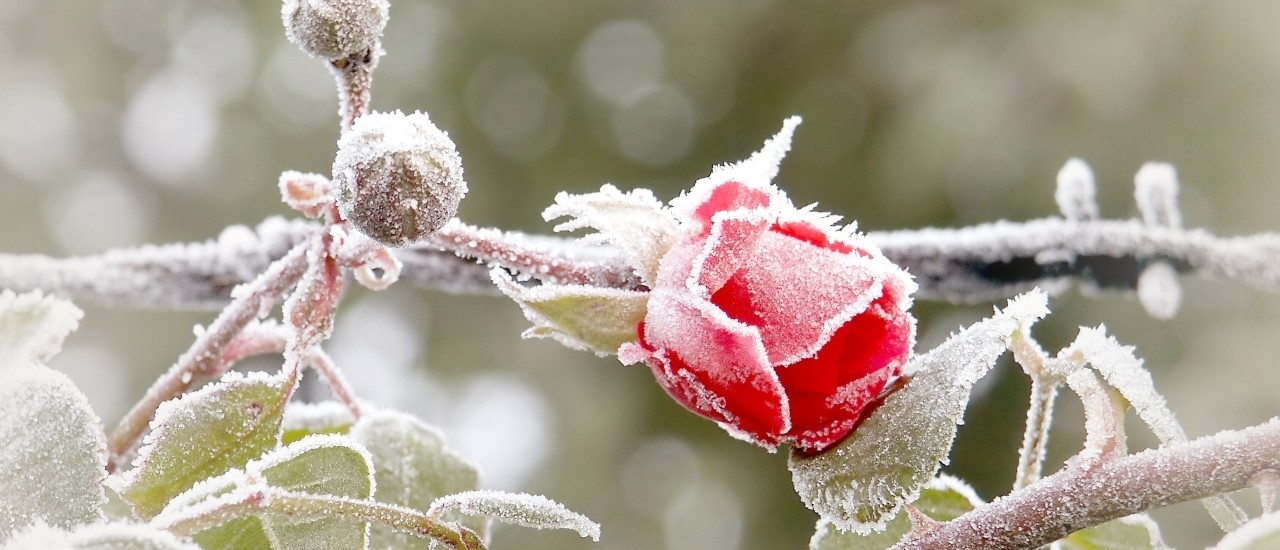 der Winter von seiner schönsten Seite