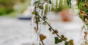 Eiszapfen im winterlichen Garten