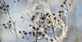 gefrorene Pflanzen im Garten